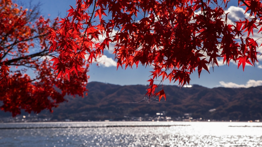 【諏訪湖】秋の紅葉に色付く。