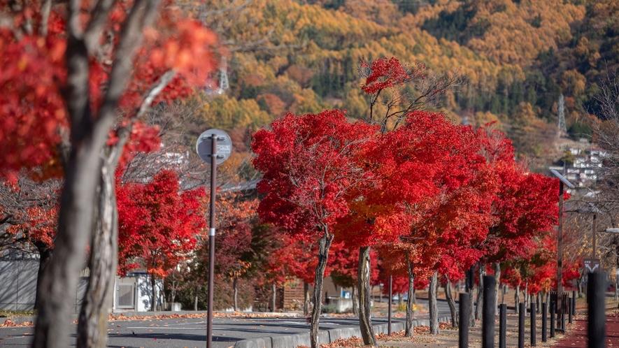 【諏訪湖】紅葉の湖岸通り。