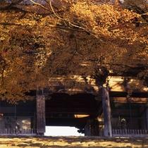 【秋(11月初旬~11月下旬)】神護寺(徒歩15分)