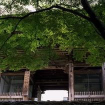 【春 グリーンシーズン】神護寺