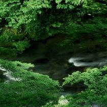 【春】清竜川