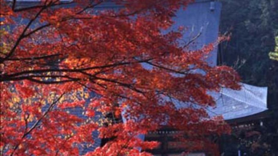 【秋(11月初旬~11月下旬)】紅葉