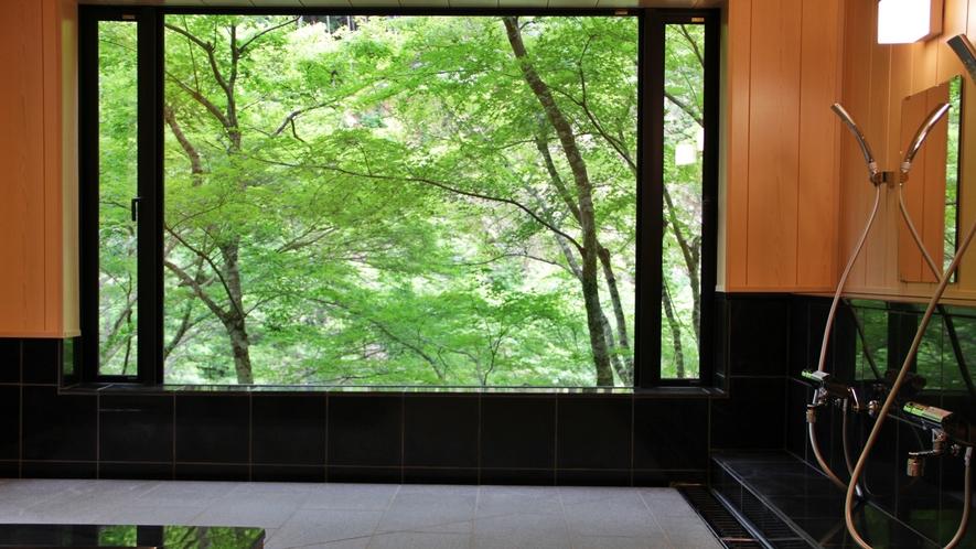 *【お風呂】新緑や紅葉の四季を眺めることの出来る癒しのお風呂です◇