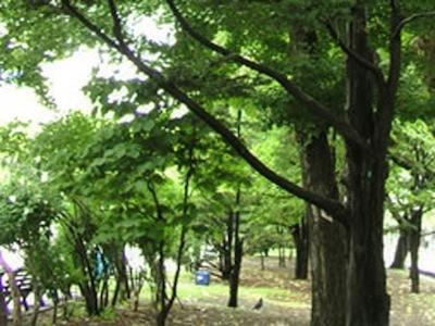 《 熊本県民運動公園内 散歩道 》