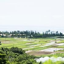金武町は古くから水田作物が豊かに実る土地柄です。