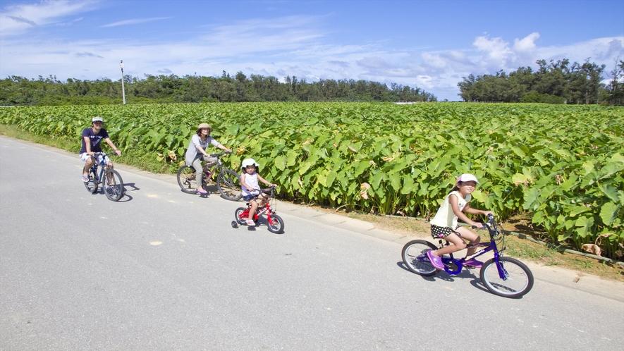 田園と田芋などの野菜畑、海や森が広がるのどかな風景をサイクリングしてみませんか?