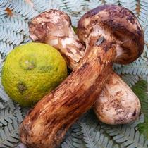 【期間限定】◆秋懐石-旬-◆~秋の旨味を閉じ込めた、松茸の香り広がる~