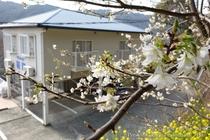 桜家の外観