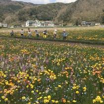 【松崎観光/春】春限定イベント!田んぼのお花畑♪