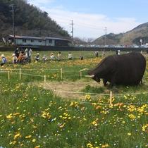 【松崎観光/春】田んぼのお花畑に佇む人々?いえいえ!全部人形なんです!