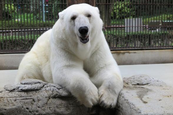 【カップル&ファミリー】とべ動物園入場チケット付★とべ動物園に1番近いホテル<素泊り>