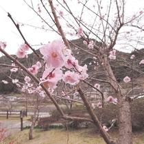 *【周囲の風景・春】