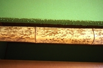 木の模様が面白い柱②