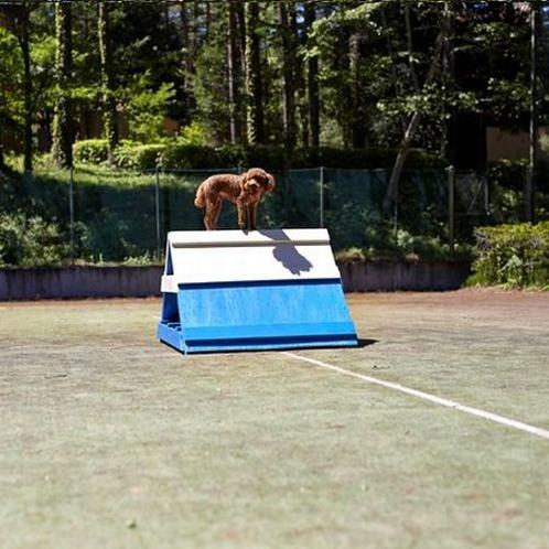 【ドッグラン】テニスコート2面分の広さでワンちゃんと一緒に運動♪※イメージ