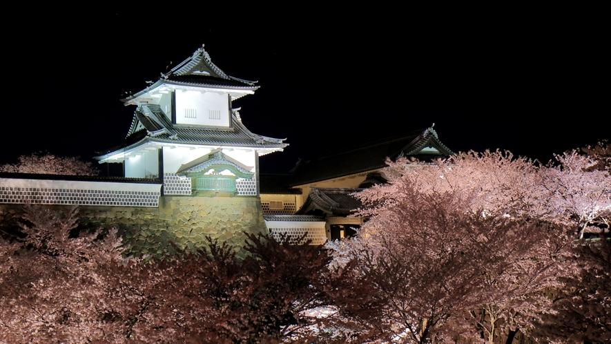 桜の名所金沢城、兼六園。美しい春の風物詩をお楽しみください。