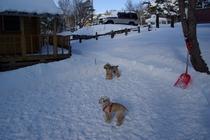 プライベートドッグランの雪遊び場