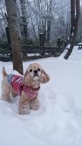 雪遊びが大好きな犬女将どらむちゃん