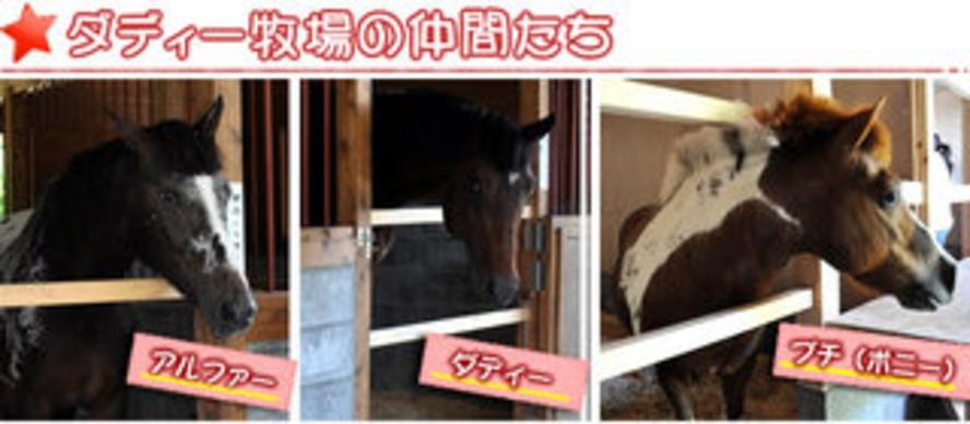 牧場の馬たち