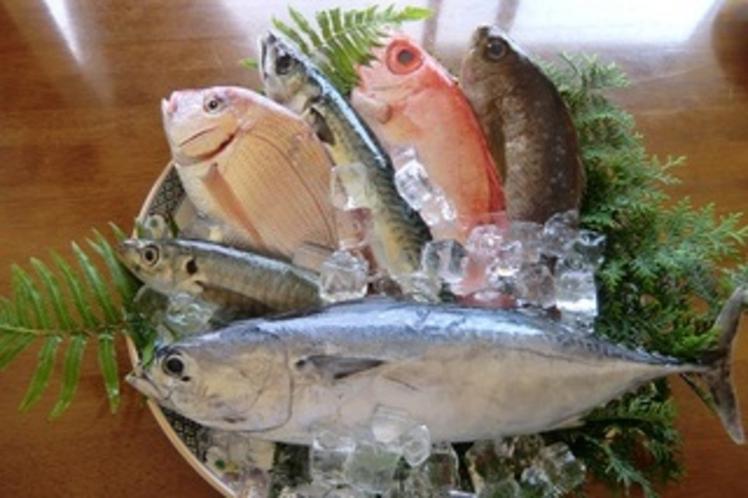 市場直送の魚