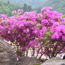季節の花木