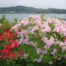 【周辺】自然いっぱいの福島。当館の周りにもツツジや椿が咲きます。