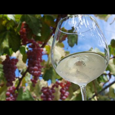 【巡るたび、出会う旅。東北 酒】山形ワイン特典付 季節の料理と源泉かけ流し温泉♪《1日5組まで》