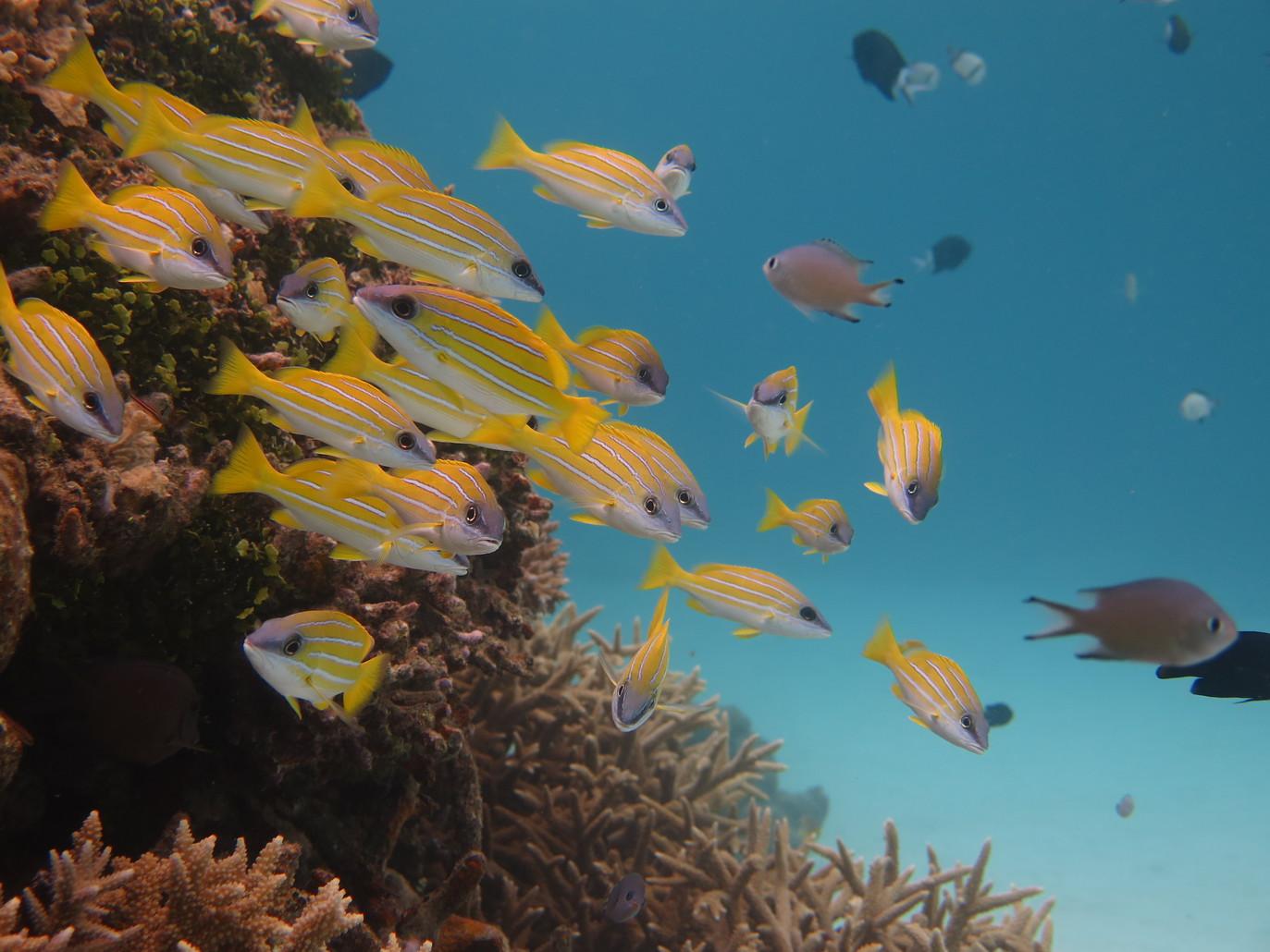 渡嘉敷島の水中写真