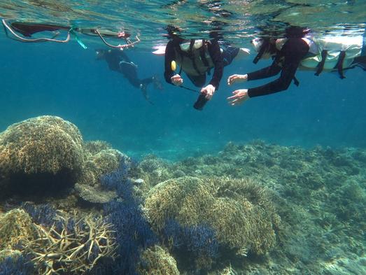 ケラマ諸島でウミガメに会いたい!シュノーケルプラン