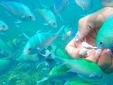 熱帯魚の餌付