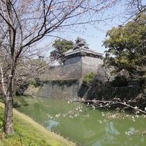 熊本城(3月27日桜開花直後)