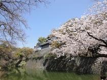 熊本城(春)