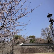 熊本城3月27日(桜開花直後Ⅱ)