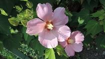 *【館内一例】玄関前にお花も咲いています