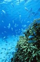 海の中に広がるブルーの世界