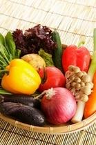 食材 野菜