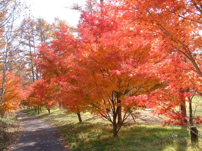 清里の森紅葉