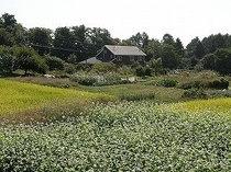ヒュッテとソバ畑