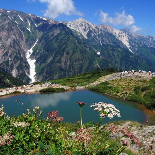 八方池と可憐に咲く高山植物