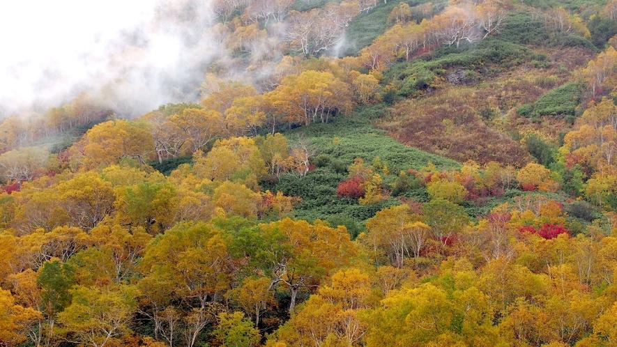 秋の栂池自然園 四季折々 移り行く自然を満喫