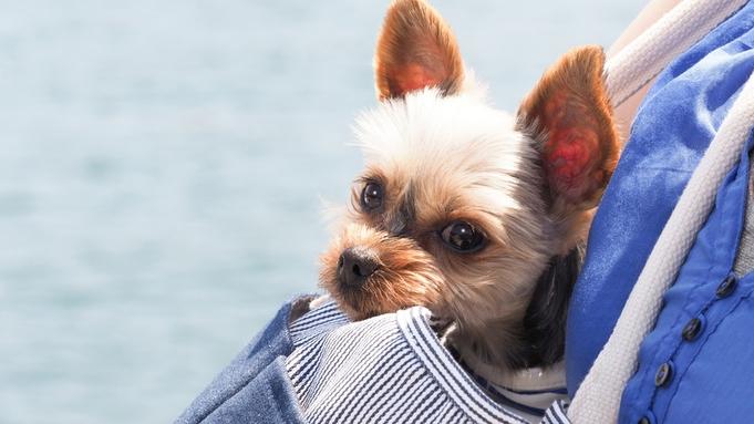 ◆ペットと泊まる夏休み◆温泉三昧!お食事は下田の街で♪セルフサービスでペットと自由にお得に♪(素泊)