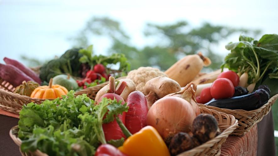肥沃な大地とさんさんと降り注ぐ太陽の光で育った味の濃い甘さが感じられる元気いっぱいの島野菜