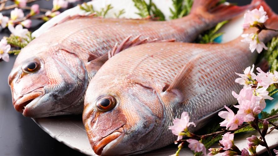 真鯛はその身を鮮やかに輝かせることから、春は桜鯛、秋は紅葉鯛と呼ばれます≪料理イメージ≫