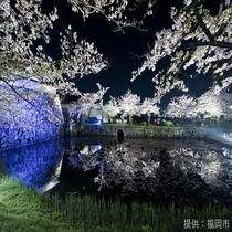 ◎舞鶴公園◎春は桜。当ホテルより地下鉄でどうぞ