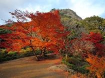 敷地内にある庭園『御船山楽園:国指定』では11月1日〜12月5日まで『紅葉祭り』を開催。