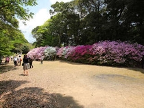 敷地内にある庭園『御船山楽園:国指定』では4月中旬〜5月初旬に20万本のツツジが咲き乱れます。