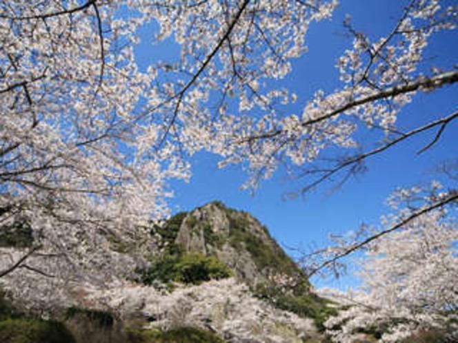 御船山楽園の5000本の桜 ※見頃は3月中旬〜4月上旬