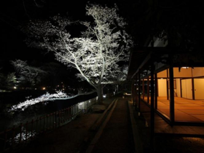 3月下旬から4月初旬まで御船山楽園で開催される桜のライトアップ ※竹林亭ご宿泊者は入園無料