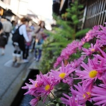 ☆古い町並み 菊の花