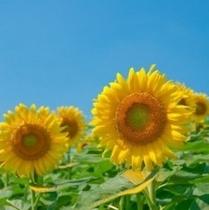 【夏の飛騨高山】~観光にお勧め~