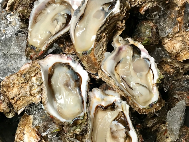 【別注料理/天然物 新潟・笹川流れの岩牡蠣例】夏だけのご馳走、ぷりっぷりの美味しさ※1個1200円税
